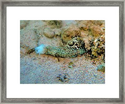 Om.underwater World. Framed Print by Andy Za