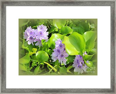 Tropical Water Lilies In Full Bloom Framed Print