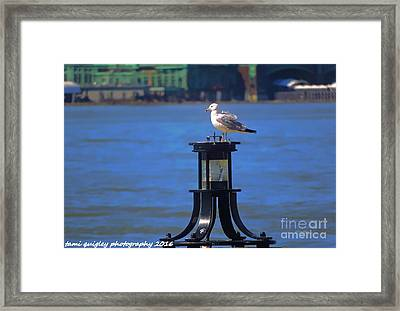 On A Clear Day You Can See Forever Framed Print by Tami Quigley