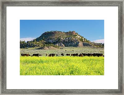 On A Field Of Yellow Framed Print