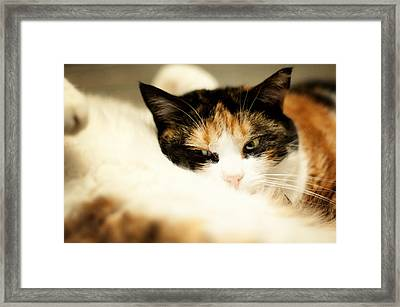 Framed Print featuring the photograph On A Furry Pillow by Laura Melis