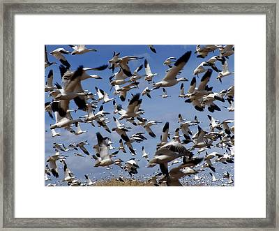 On A Mission Bosque Del Apache Framed Print by Kurt Van Wagner