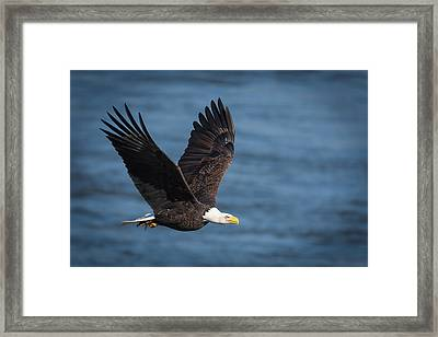 Framed Print featuring the photograph On A Mission by Cindy Lark Hartman