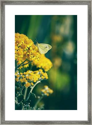 On A Warm Summer Day Framed Print