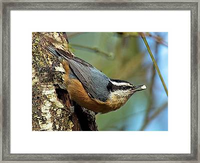 On Alert Framed Print