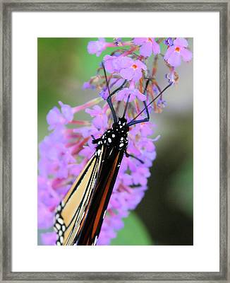 On An Angle Framed Print by Karol Livote