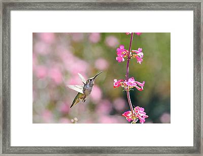 On Approach Framed Print by Emily Bristor