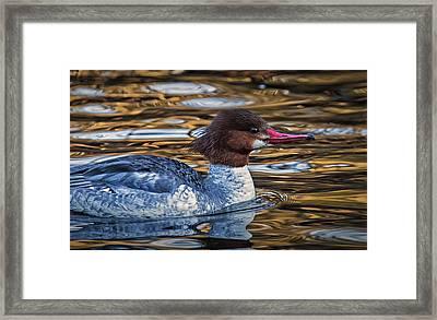 On Copper Pond Framed Print