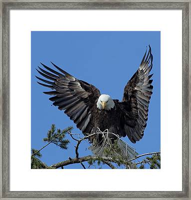 On Display Framed Print