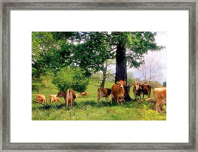 On Emerald Pastures Framed Print by Jan Amiss Photography