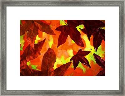 On Golden Pond Framed Print