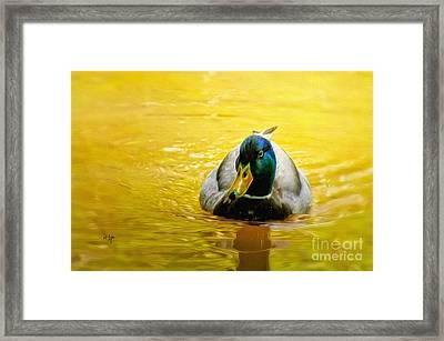 On Golden Pond Framed Print by Lois Bryan