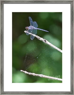 On Gossamer Wings Framed Print