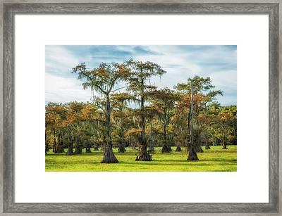 On Green Bayou Framed Print
