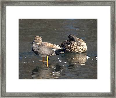On Ice Framed Print