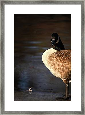 Framed Print featuring the photograph On Ice by Karol Livote