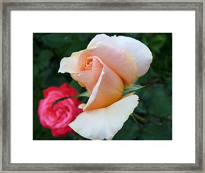On-looker Framed Print by Carol Sweetwood
