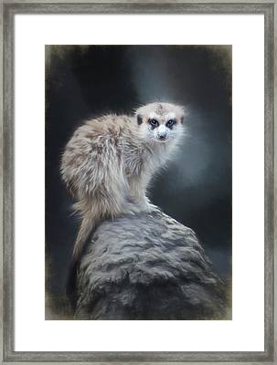 On Lookout Framed Print