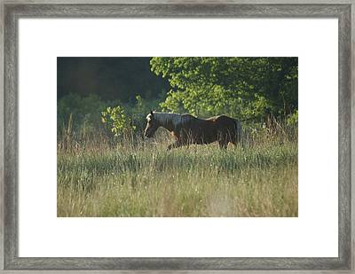 Framed Print featuring the photograph On My Own by Heidi Poulin