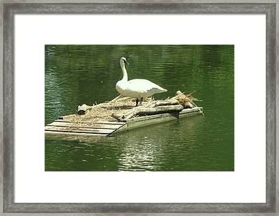 On My Private Island Framed Print by Art Spectrum