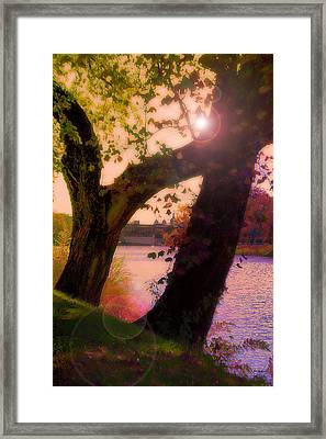 On The Bank Framed Print