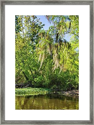 On The Bayou - Spanish Moss Framed Print by Steve Harrington