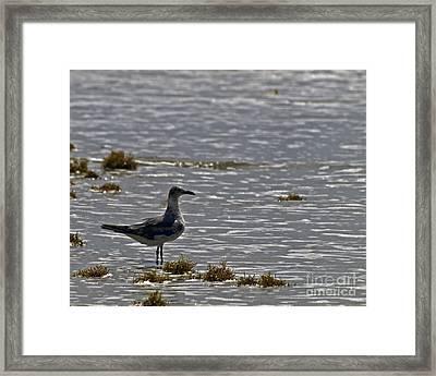 Framed Print featuring the photograph On The Beach by Ken Frischkorn