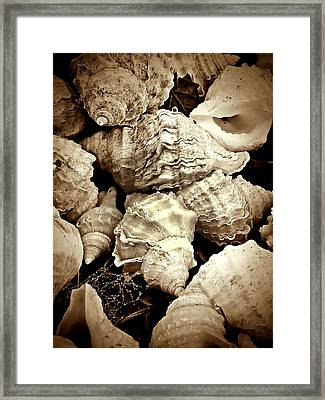 On The Beach - Shells In Sepia Framed Print