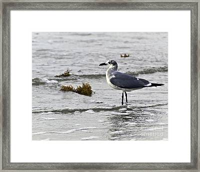 Framed Print featuring the photograph On The Beach Two by Ken Frischkorn