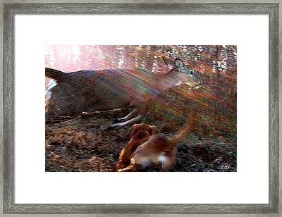 On The Chase Framed Print by Bill Stephens