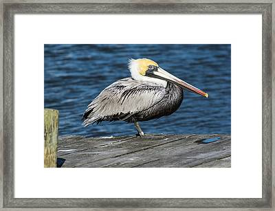 On The Dock Framed Print by Gregg Southard