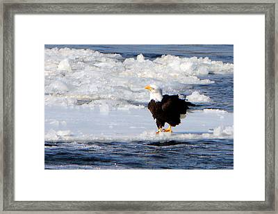 On The Edge Framed Print by Dave Clark