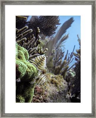 On The Edge Framed Print by Steve Weigold