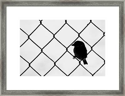 On The Fence Framed Print by Afrodita Ellerman