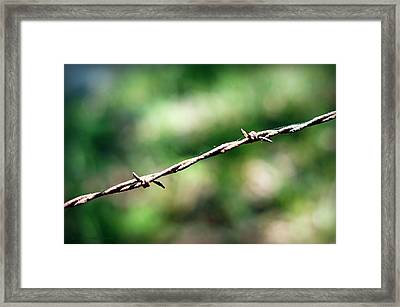 On The Fence Framed Print by Cricket Hackmann