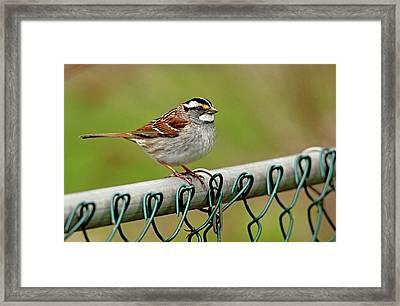 On The Fence Framed Print by Debbie Oppermann