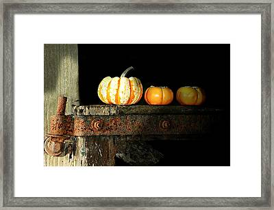 On The Fence Framed Print by Diana Angstadt