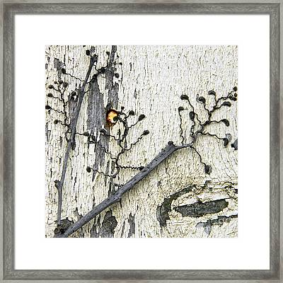 On The Fence Framed Print by Lee Craig