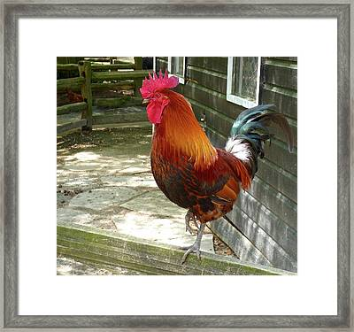 On The Fence Framed Print