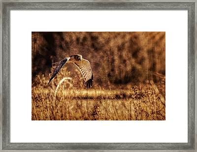 Framed Print featuring the photograph On The Hunt by Annette Hugen