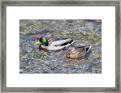 Framed Print featuring the photograph On The Hunt by David Lawson