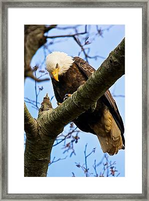On The Hunt Framed Print by Naman Imagery