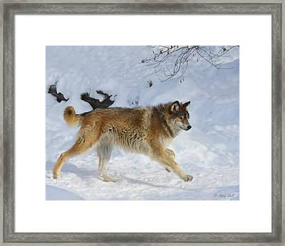 On The Hunt Framed Print by Gerry Sibell
