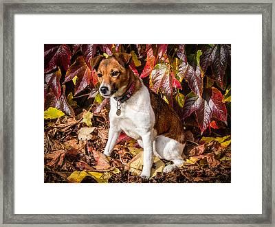 On The Leaves Framed Print