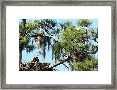On The Lookout Framed Print by David Yunker