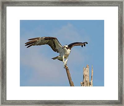 Framed Print featuring the photograph On The Lookout by Robert Pilkington