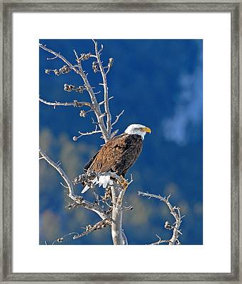 On The Lookout Framed Print