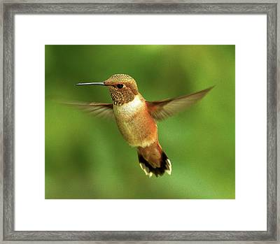 On The Lookout Framed Print by Sheldon Bilsker