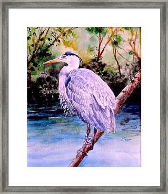 On The Lookout Framed Print by Sher Nasser