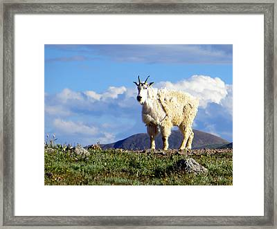 On The Mountain Top Framed Print